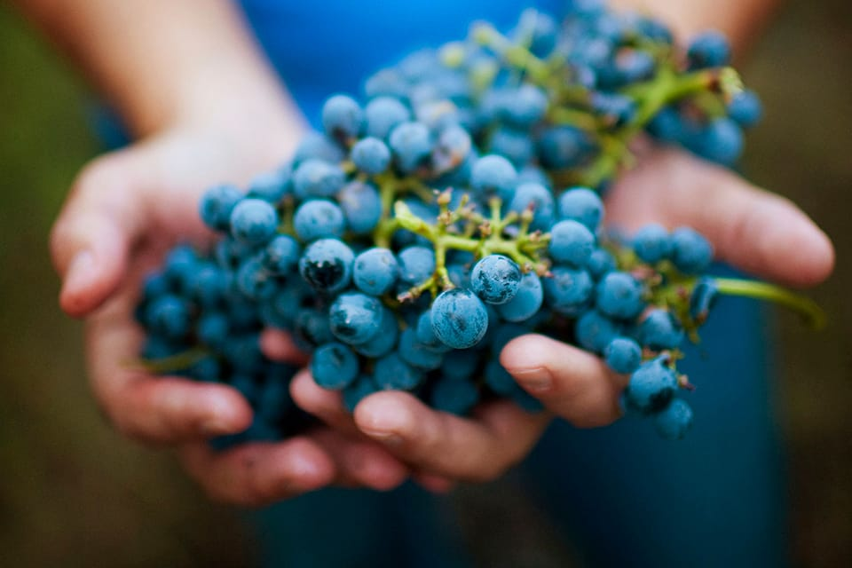 Teseo 7 Wine