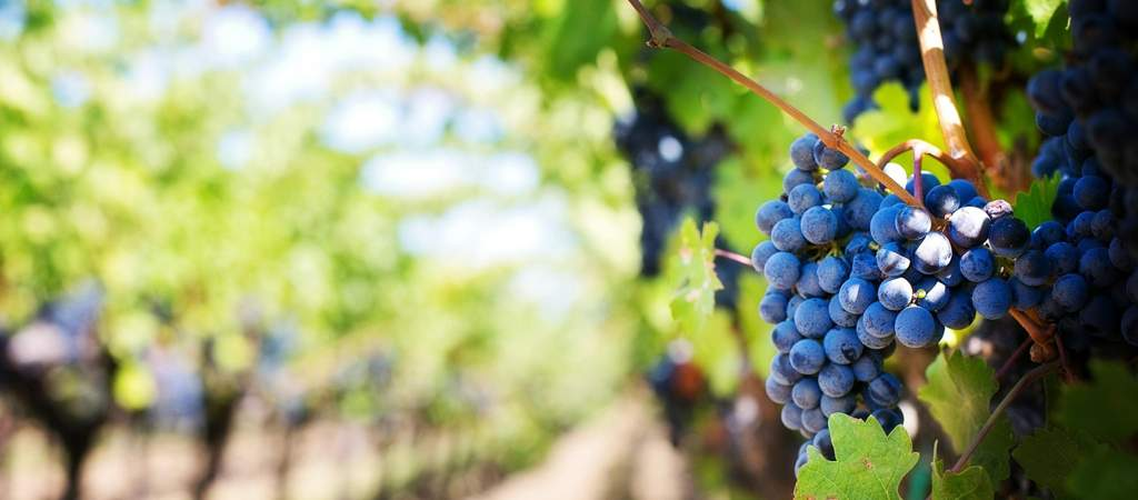 The Winery of Tomorrow, innovation seen by Angela Velenosi