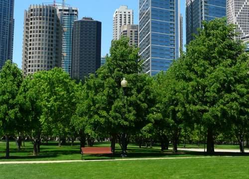 The Urban Park